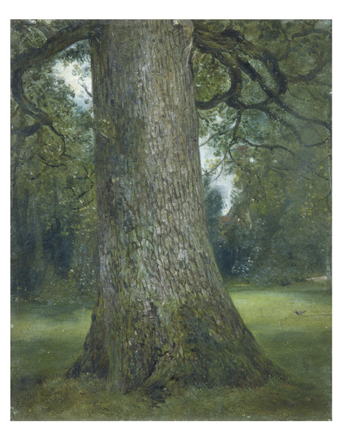 John Constable, 'Study of the Truck of an Elm Tree,' ca. 1824, Victoria and Albert Museum (V&A)