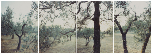 , 'Olive Trees After the Heat,' 1998, Pace/MacGill Gallery