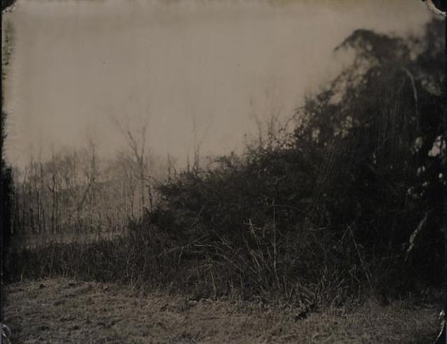 , 'Brambles,' 2011, GALLERY 1/1