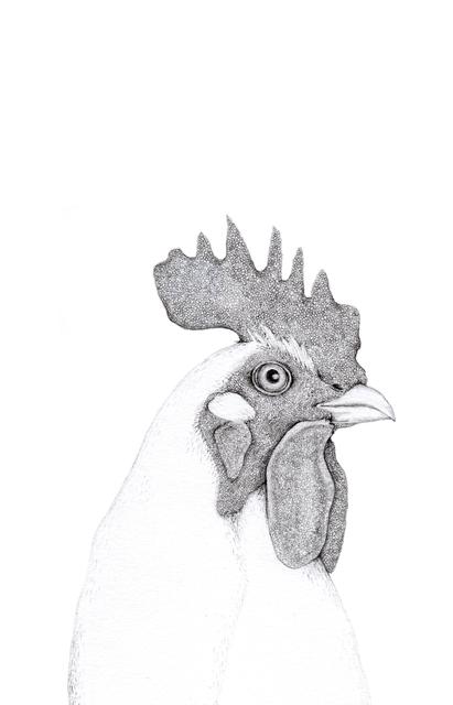 , 'Chicken,' 2014, Rebecca Hossack Art Gallery