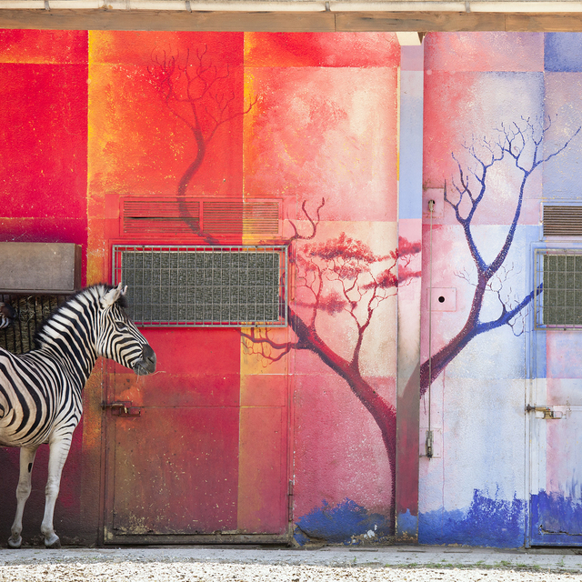 , 'Zebra and Red Wall,' , Galerie Dumonteil