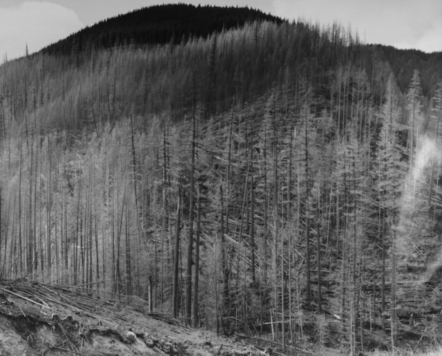 , 'Downed, standing dead, and living trees at the Northeastern limit of eruption impact zone, 13.5 miles NE of Mt. St. Helens, Wash. ,' 1983, Etherton Gallery