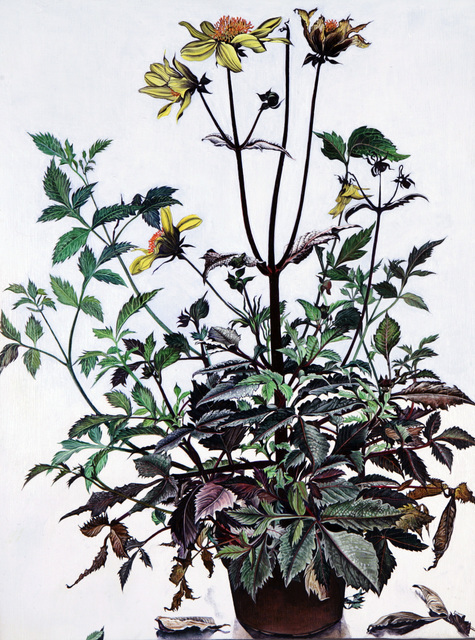 , 'Black Dahlia,' 2009, Flowers