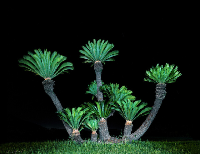 , 'Palm Tree I,' 2011, Galerie f5,6