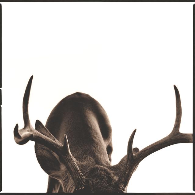 Nine Francois, 'Deer I', Weston Gallery