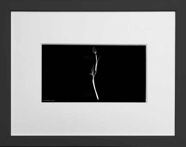 , 'Flower CT Videos,' 2018, MyMuseum