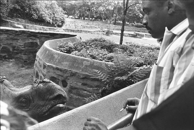 , 'Bronx Zoo, New York,' 1963, Etherton
