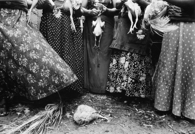 , 'Limpia de Pollos, Juchitán, Oaxaca, Mexico,' 1986, ROSEGALLERY