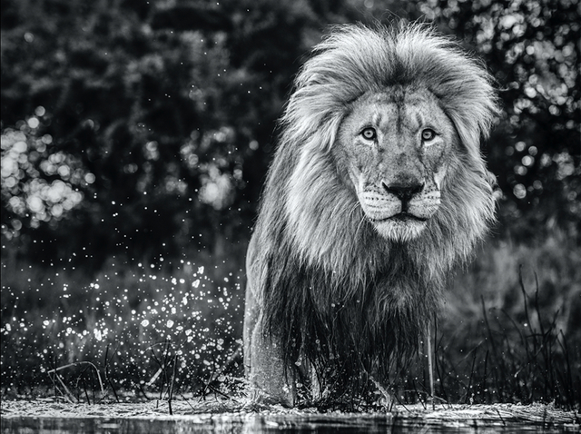 David Yarrow, 'After the Flood', 2020, Photography, Archival Pigment Print, Hilton Asmus