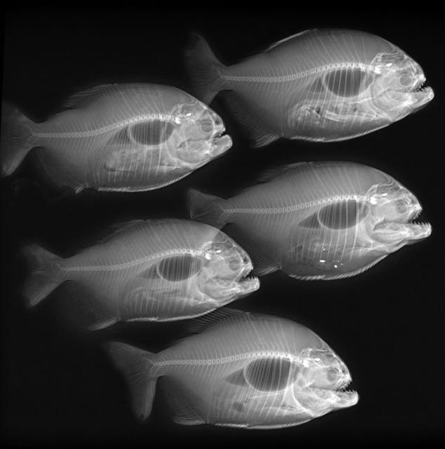 , 'Piranhas,' , Galeria Tempo