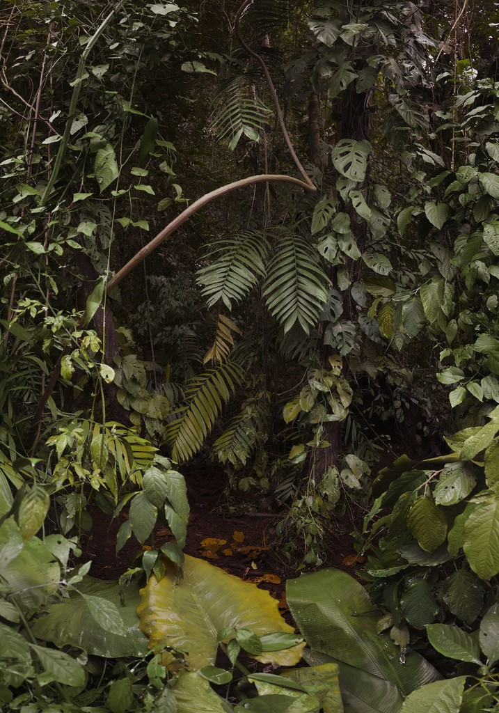 Landscape Painting (Jungle)