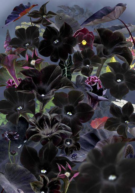 , 'Floresta Negra #1,' 2018, Huxley-Parlour
