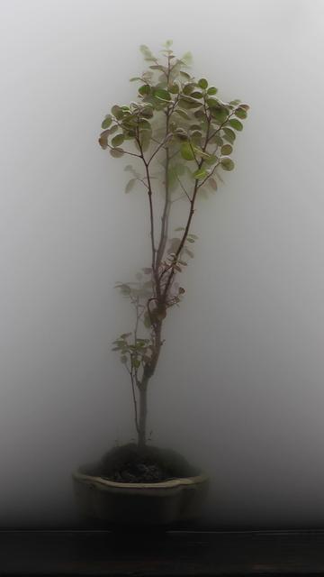 , 'Still Life 03-Bonsai,' 2009, Padiglione d'Arte Contemporanea (PAC)