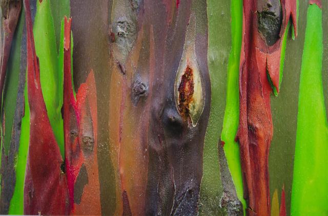 , 'Corteza Arcoiris VI,' 2013, Galería RGR