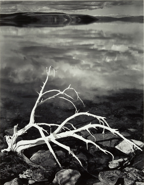 Ansel Adams, 'White Branches, Mono Lake, California', 1950, Photography, Silver print, Robert Mann Gallery