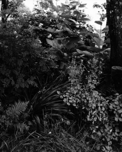 , 'Gartenstück Nr. 11, Weipertshausen,' 2018, Galerie Jordanow