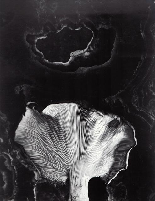 , 'Fungus, Ipswich, Mass,' Neg. date: 1962 / Print date: Later, Alan Klotz Gallery