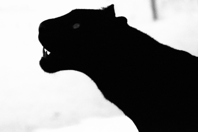 , 'Black Panther,' 2003, Bluerider ART