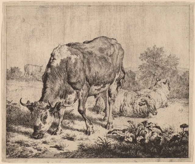 Adriaen van de Velde, 'Spotted Bull and Three Sheep', 1670, Print, Etching on laid paper, National Gallery of Art, Washington, D.C.