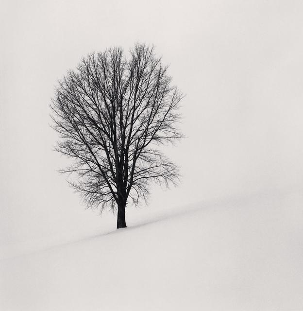 , 'Philosopher's Tree, Study 1, Biei, Hokkaido, Japan,' 2004, Blue Lotus Gallery