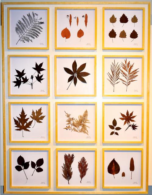 , 'La Naturaleza no se Atrapa, Panel I,' 2018, ACCS Visual Arts