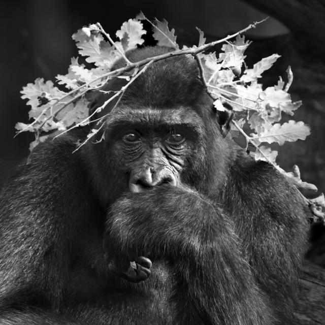 , 'Serie Primates,' 2015, Flecha