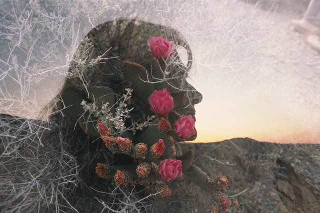 , 'Mary, Queen of the Cactus, April,' 1986, Benrubi Gallery