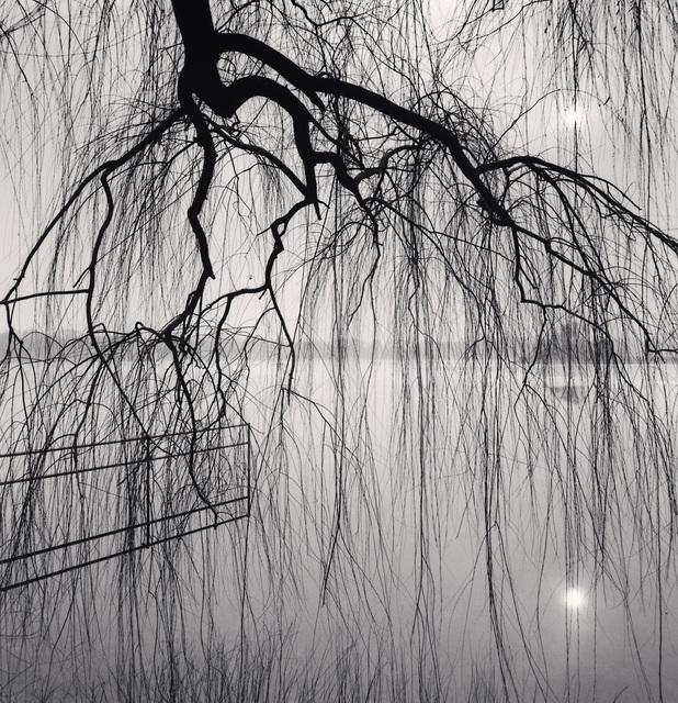 , 'Lake Tree, Beihai Park, Beijing, China,' 2008, photo-eye Gallery