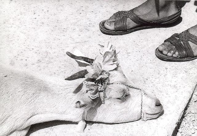 , 'Cabritas. La Mixteca, México,' 1992, Rafael Ortiz