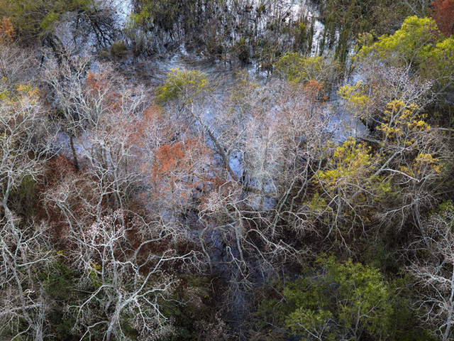 , 'Trees Recover After Flooding, Vermillion Parish, Louisiana, 12/10/14,' 2014, A Gallery for Fine Photography