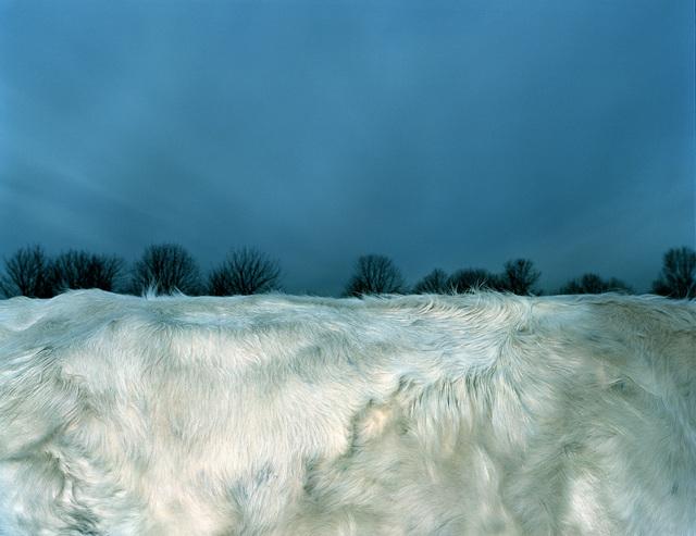 Leon Steele, 'Snow Pelage', 2002, Photography, Chromogenic Print, Wren London