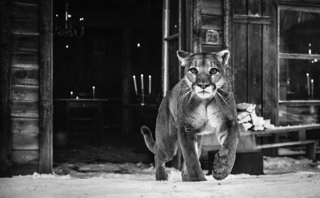 David Yarrow, 'The Landlord', 2015, Isabella Garrucho Fine Art