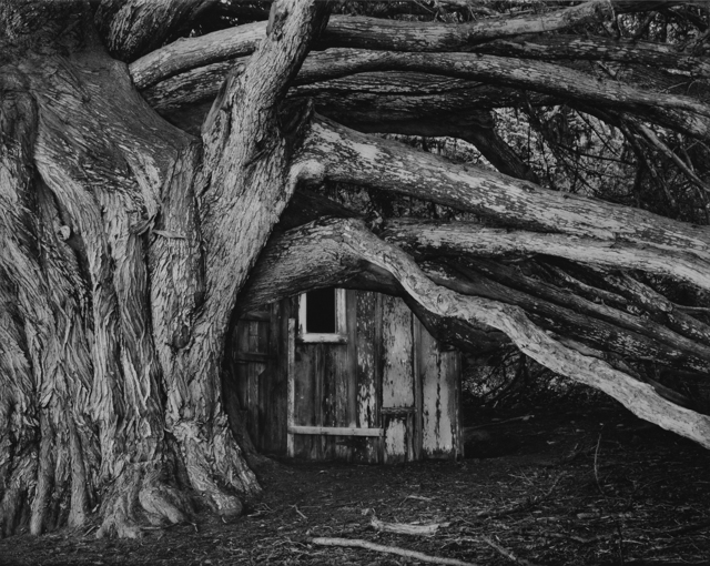 , 'Cypress, Whaler's Cabin, Point Lobos,' 1978, Photography West Gallery