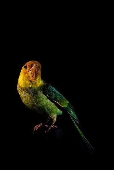 , 'Oiseau V,' , Fotospot