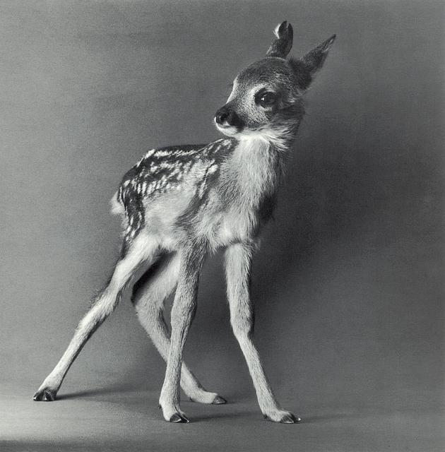 "Michael O'Neill, 'European Roe Deer, ""Muni""', 1991, Etherton Gallery"