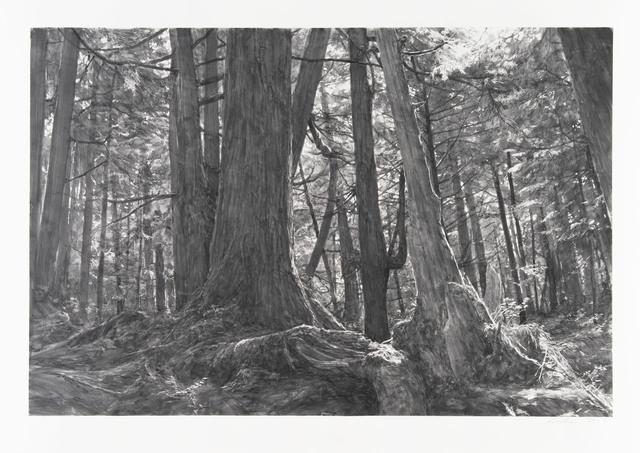 Michael Kareken, 'Trees Near Second Beach: Olympic Peninsula', 2018, Highpoint Editions