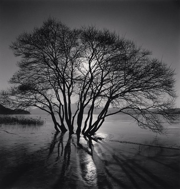 , 'Yedang Reservoir Tree, Chungcheongnam-do, South Korea,' 2018, G. Gibson Gallery