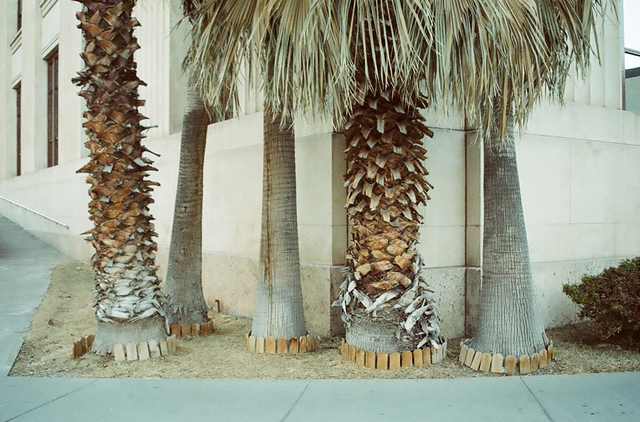 , 'Untitled (Texas Palms),' 2011, Cob