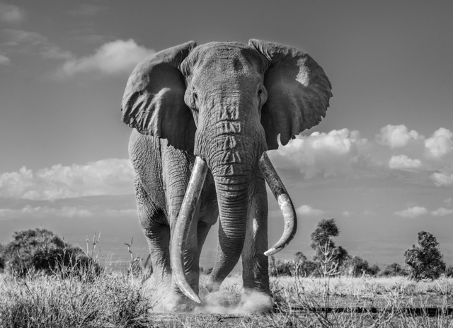 David Yarrow, 'Tim', 2019, Photography, Archival Pigment Photograph, Holden Luntz Gallery