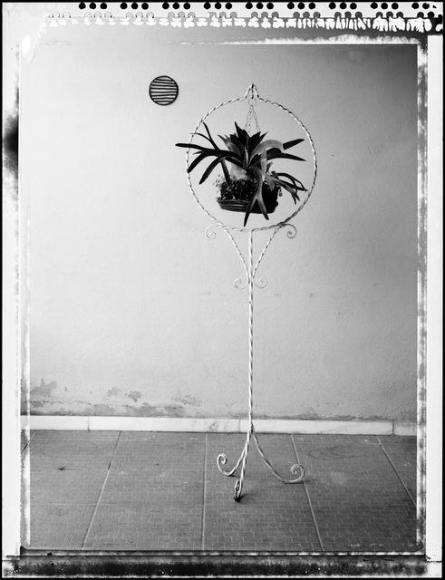""", '""""chifre"""",' 2015, Lemos de Sá Galeria"""