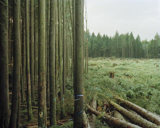 Eirik Johnson, 'Freshly Felled Trees, Nemah, Washington', 2007, G. Gibson Gallery