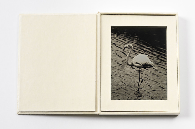 , 'Greater Flamingo,' 2012-2016, EUQINOM Gallery