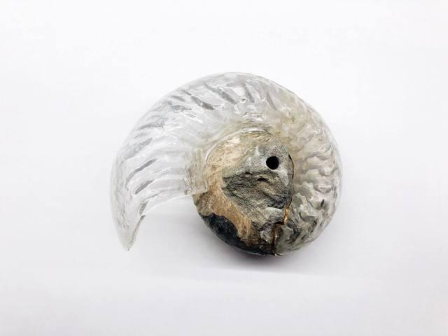 , 'Think Evolution #1 : Kiku-ishi(Ammonite),' 2019, MAHO KUBOTA GALLERY