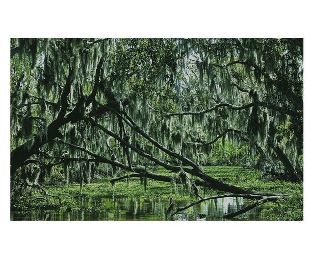 , 'Bayou,' 2012, ARC Fine Art LLC