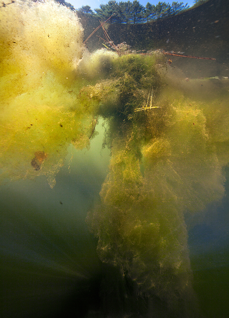 , 'L'écume d'étang (série Underworld),' 2015, Galerie Hugues Charbonneau