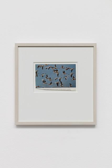 , 'Untitled (Flock),' 2020, Galerie Nordenhake