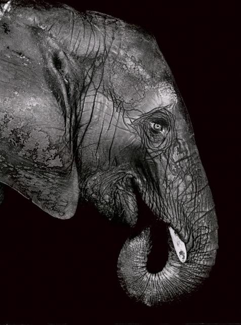 , 'Elephant,' 1993, Galerie Peter Sillem