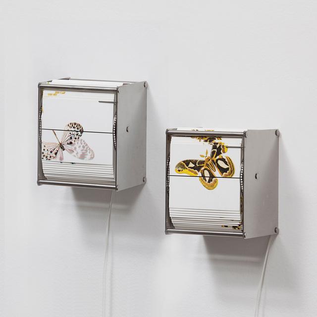 , 'Vivarium A,' 2014, Carbono Galeria