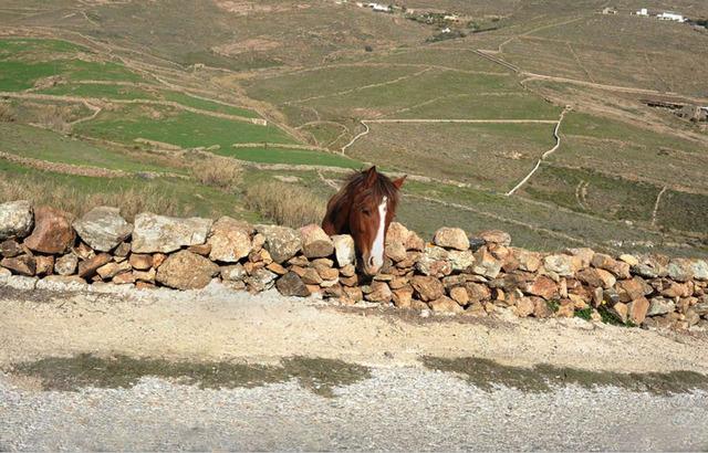 , 'Mykonos (horse),' 2002, Dio Horia