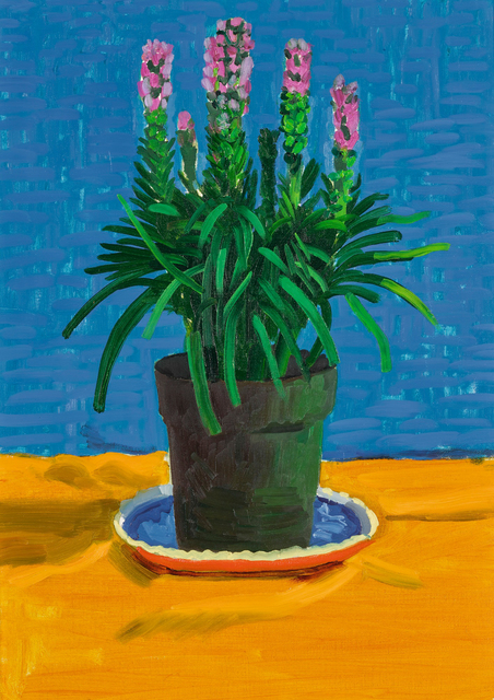 David Hockney, 'Plant on Yellow Cloth', 1995, Sotheby's: Contemporary Art Day Auction